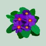 Blauwe haand getrokken sleutelbloem met groene bladeren Royalty-vrije Stock Afbeeldingen