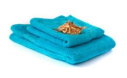 Blauwe handdoek met zeeschelp Royalty-vrije Stock Fotografie