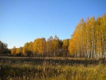 Blauwe heldere hemel, de herfst, gele bomen, droog gras in de weide royalty-vrije stock afbeelding