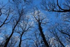 Blauwe hemel 2 Stock Fotografie