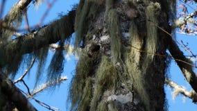 Blauwe hemel achter een boom stock videobeelden