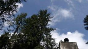 Blauwe hemel die zich over donkere boombovenkanten en bovenkant van huis in de zomer bewegen stock video