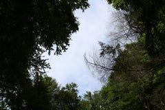 Blauwe hemel door de bomen Royalty-vrije Stock Afbeelding