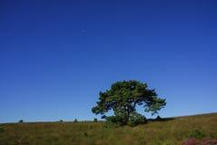 Blauwe hemel een boom en een maan Royalty-vrije Stock Fotografie