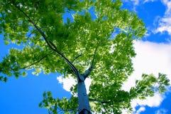 Blauwe hemel en boom stock afbeeldingen