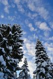 Blauwe Hemel en de Wintersparren in de Ural-Bergen, Rusland, Chelyabinsk-gebied, Minyar Pushkin` s fee tal Stock Afbeelding