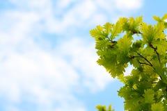 Blauwe hemel en eiken bladeren Royalty-vrije Stock Afbeeldingen