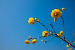 Blauwe hemel en gele bloemen Royalty-vrije Stock Foto
