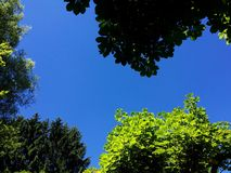 Blauwe hemel en groene bladeren Royalty-vrije Stock Afbeeldingen