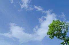 Blauwe hemel en groene boom Stock Afbeeldingen