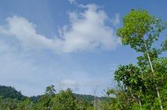 Blauwe hemel en groene boom Stock Fotografie