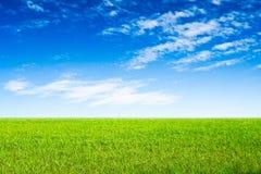 Blauwe hemel en groene grasscène Stock Afbeeldingen