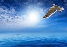 Blauwe hemel en hekelende zeemeeuw stock foto