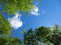 Blauwe hemel en heldergroene bomen Stock Foto