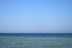 Blauwe hemel en het duidelijke zeemeeuw vliegen Stock Foto's