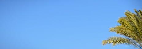 Blauwe hemel en palm Stock Foto's