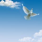 Blauwe hemel en partijen kleine wolken, Royalty-vrije Stock Foto