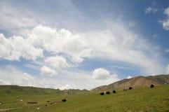 Blauwe hemel en prairie Royalty-vrije Stock Afbeeldingen