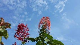 Blauwe hemel en rode bloem Stock Afbeeldingen