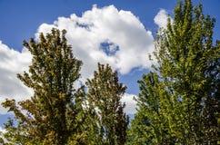Blauwe hemel en witte wolken en bossen royalty-vrije stock foto's