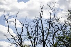 Blauwe hemel en witte wolken en bossen royalty-vrije stock foto