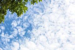 Blauwe hemel en wolken als schoonheids natuurlijke milieu met groene boom Stock Foto's
