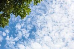 Blauwe hemel en wolken als schoonheids natuurlijke milieu met groene boom Royalty-vrije Stock Fotografie