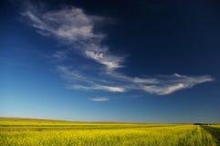 Blauwe hemel en wolken en cole bloem Stock Foto