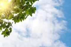 Blauwe hemel, gezwollen wolken en verse groene boom Royalty-vrije Stock Afbeeldingen