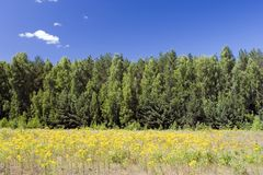 Blauwe hemel, groen bos en geel gebied stock foto