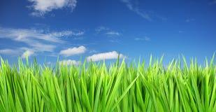 Blauwe hemel, groen gras Stock Foto