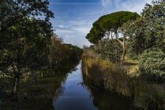 Blauwe hemel, groene bomen en stromen van water royalty-vrije stock afbeelding