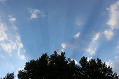 Blauwe hemel lichte stralen van zonsondergang en bomen Royalty-vrije Stock Afbeeldingen