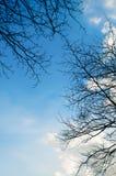Blauwe hemel met boeg van boom stock foto