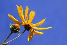 Blauwe Hemel met Gele Daisy Stock Afbeelding