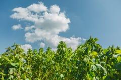 Blauwe hemel met groene bladerenachtergrond royalty-vrije stock foto