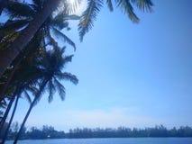Blauwe hemel met kokospalm royalty-vrije stock foto