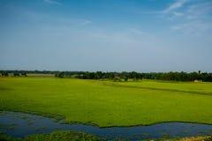 Blauwe hemel met open grasgebied Royalty-vrije Stock Foto