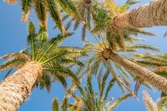 Blauwe hemel met palmen, mening van bodem, het tropische concept van het reistoerisme stock fotografie