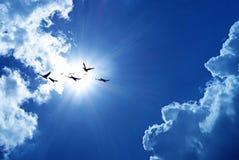 Blauwe hemel met vliegende vogels natuurlijke achtergrond royalty-vrije stock afbeelding