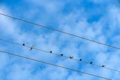 Blauwe hemel met vogel en witte wolkenachtergrond Stock Fotografie