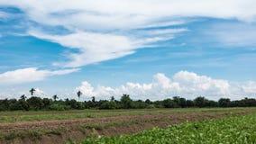 Blauwe hemel met witte wolken die en het plantaardige perceel bewegen verlengen stock footage