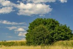 Blauwe hemel met witte wolken over de zomerweide en struiken royalty-vrije stock afbeeldingen
