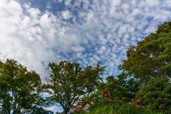 Blauwe hemel met witte wolkenvorming over groene bomen met bloemen Royalty-vrije Stock Fotografie