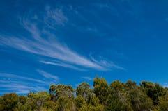 Blauwe hemel met wolken boven een bos stock fotografie