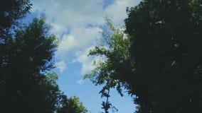 Blauwe hemel met wolken door zwarte bomen stock video