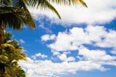 Blauwe hemel met wolken en palmen Stock Fotografie