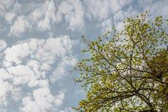 Blauwe hemel met wolkenachtergrond en textuur Stock Foto's
