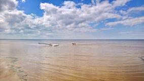 Blauwe hemel met wolkenstrand het surfen en de hond van Labrador stock afbeelding