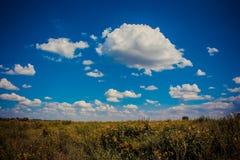Blauwe hemel over een gebied van bloemen stock foto